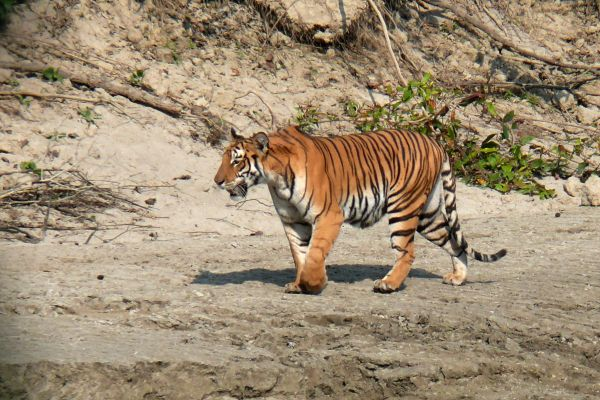 Chitwan National Park wildlife and Nature Tour