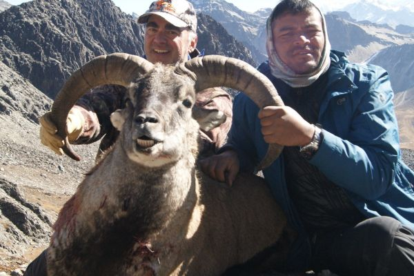 Blue Sheep & Himalayan Tahr Hunt