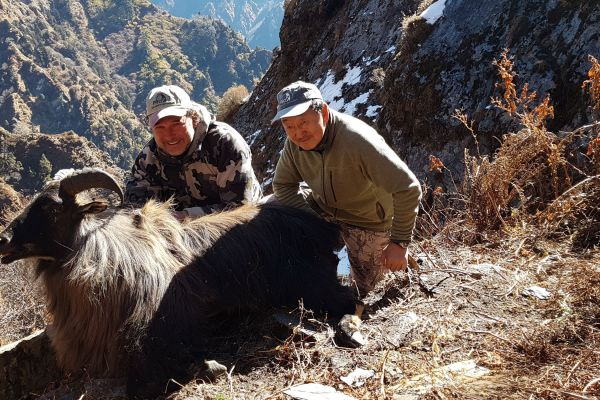 Himalayan Tahr Hunt